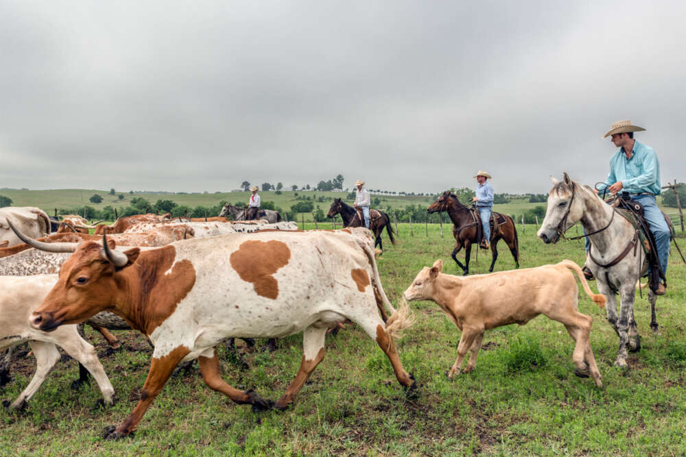 Texas Foodie Agriculture Trends & Economic Developments